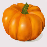 Vector pumpkin. Vegetable fruit isolated on white background Royalty Free Stock Photography