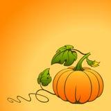 Vector pumpkin. Stock Photo