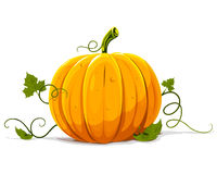 Vector pumpkin vegetable fruit isolated Stock Photo