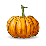 Vector pumpkin  on white background Stock Photos