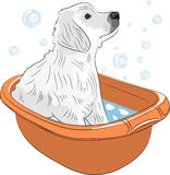 Vector puppy labrador retriever. White labrador retriever puppy caught in a pan to wash and soap bubbles Royalty Free Stock Images