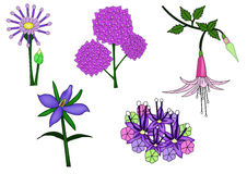 The Vector of Purple flower. The Vector of several Purple flower ,Illustrator Vector Royalty Free Stock Image