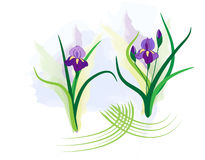 Vector purple irises Royalty Free Stock Image