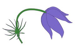 Vector purple snowdrop flower royalty free illustration
