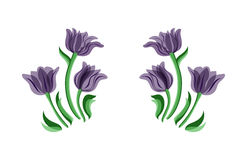 Vector purple tulips Royalty Free Stock Images