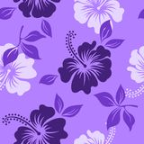 Vector purple and white tropical summer hawaiian seamless pattern with tropical hibiscus flowers. Beautiul flower for decoration or design fabric Royalty Free Stock Photos