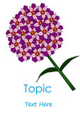 The Vector of Purplr cycle flower. The Vector of single Purplr cycle flower Stock Photos