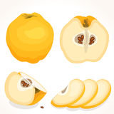 Vector quince. Sliced, whole, half quince. royalty free illustration