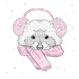 Vector raccoon . Cute raccoon vector . Raccoon painted by hand. Raccoon in the winter scarf and headphones . Winter postcard. Prin Royalty Free Stock Images