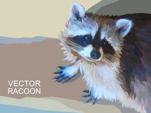 Vector racoon made of polygons. Eps 10. Royalty Free Stock Photos