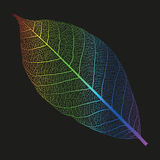 Vector rainbow skeleton of leaf Royalty Free Stock Photos