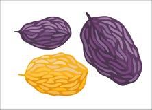 Vector raisins, Dodo collection Stock Images