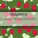 Vector raspberry banner Stock Photography