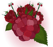 Vector raspberry city Royalty Free Stock Images