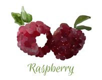 Vector isolated raspberry Royalty Free Stock Photos