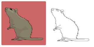 Vector - Rat or Mouse. Rat or Mouse standing stock illustration