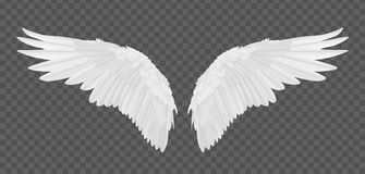 Vector realistic angel wings isolated on transparent background.  vector illustration