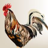 Vector realistic cock Royalty Free Stock Photo