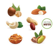 Vector Realistic Collectiom of Nuts. Isolated on White Background. Illustration Stock Image