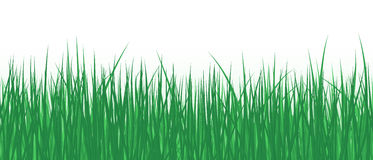 Vector realistic detailed illustration grass seamless pattern isolated Royalty Free Stock Photo