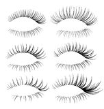 Vector realistic eyelash textures. Vector realistic eyelash brushes for your design Royalty Free Stock Image