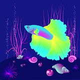Vector realistic fish on the dark blue beckgound, element for design works. Vector realistic fish on the dark blue beckgound with shells and pearls, element for Royalty Free Stock Image