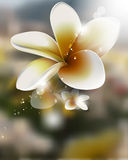 Vector realistic flower on blurred background Royalty Free Stock Photos