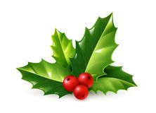 Vector realistic holly Christmas ornament. Green leaves and red berries  on white background Stock Photos