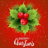 Vector realistic holly and fir tree branches Stock Photos