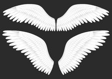 Vector realistic illustration of white angel wings. On a black background Royalty Free Stock Image