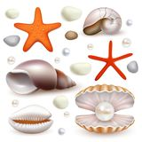 Vector realistic seashell and starfish icon set Royalty Free Stock Photos
