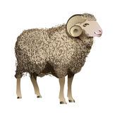 Vector Realistic Sheep Royalty Free Stock Images