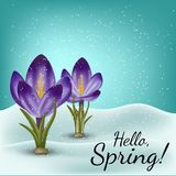 Vector realistic spring flower crocus in a snowdrift. Use for postcards, banners, backgrounds. Gradient mesh tool. Vector realistic spring flower crocus in a Stock Photos