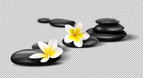 Vector realistic stones on transparent background. Pebbles with Plumeria flowers. Template for Spa salon, cosmetic vector illustration