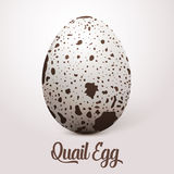 Vector realistic white egg with spots. On light Stock Photo