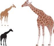 Vector realistische giraf Stock Afbeeldingen