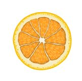 Vector realistische oranje plak Illustratie van citrusvrucht Royalty-vrije Stock Foto