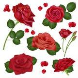Vector realistische rood nam bloemen op witte achtergrond voor ontwerp, banners, uitnodiging van het huwelijk, verjaardag toe Stock Fotografie