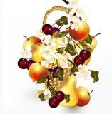 Schöner Entwurf mit realistischem Vektor trägt im Korb mit Br Früchte Stockbild