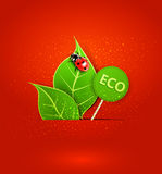 Vector red background with leafs and ladybird Royalty Free Stock Photography