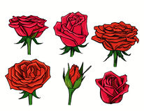 Vector red beautiful roses Stock Photo