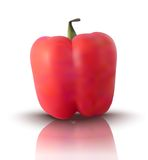 Vector red bell pepper Royalty Free Stock Image