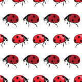 Vector Red Black Ladybird Stripes Seamless Pattern Royalty Free Stock Image