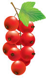 Vector red currant Royalty Free Stock Photos