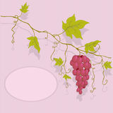 Vector red grapes. Royalty Free Stock Images