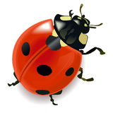 Vector Red Ladybug Royalty Free Stock Image