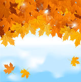 Vector red maple leaves on blue sky background Stock Images