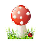 Vector red mushroom Stock Photo