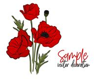 Vector red poppies flowers. Bloom symbol of spring - botany illustration. Opium season holiday plant. Peace symbol. Picture Royalty Free Stock Photos