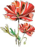 Vector red poppies with stems isolated on a white background. stock illustration